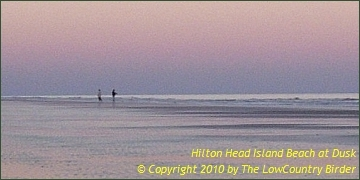 Dusk on the beach - Hilton Head Island