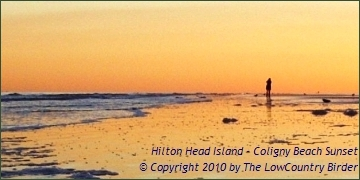 Winter Sunset on Coligny Beach - Hilton Head Island
