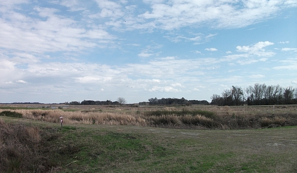 Savannah NWR - Old Rice Levees along Laurel Hill Drive